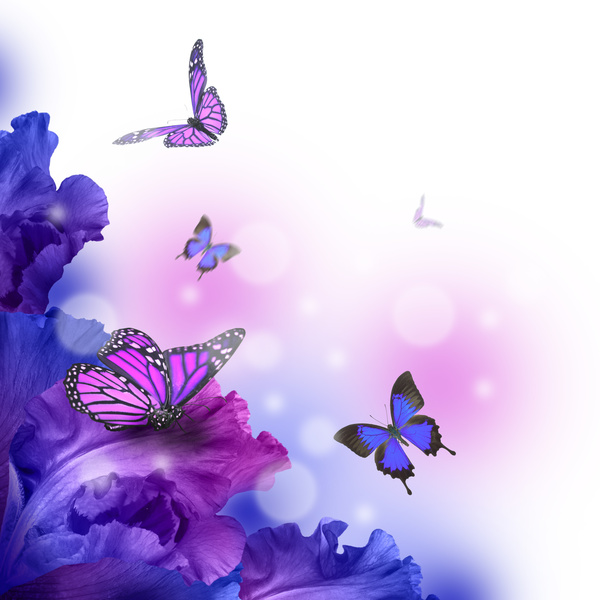 Background Butterfly HD Picture 03