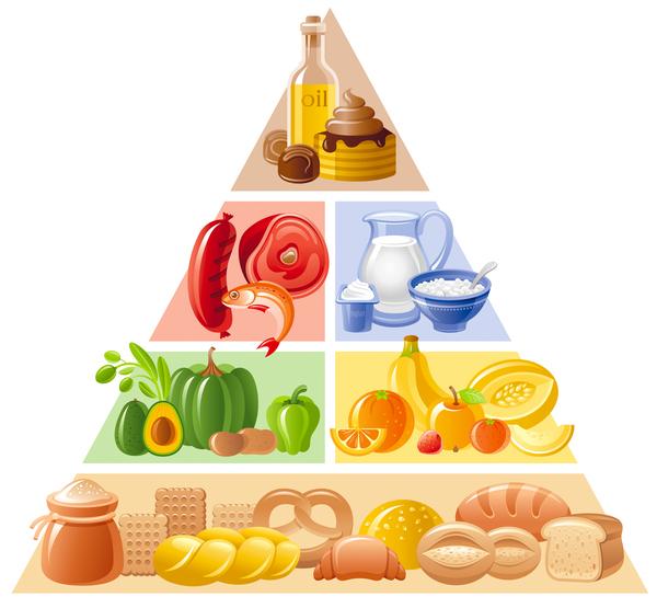 balanced food pyramid infographics template vector 02 free download