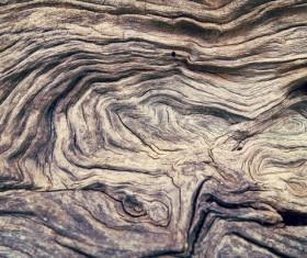 Bark natural texture Stock Photo 02
