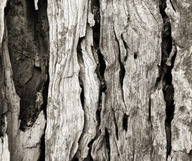 Bark natural texture Stock Photo 03