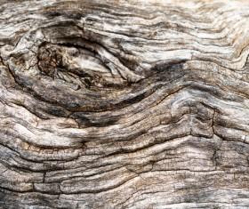 Bark natural texture Stock Photo 04