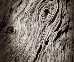 Bark natural texture Stock Photo 05
