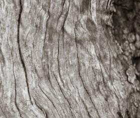 Bark natural texture Stock Photo 06