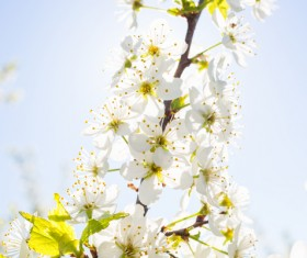 Beautiful spring flowers HD picture 02
