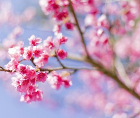Beautiful spring flowers HD picture 03