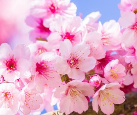 Beautiful spring flowers HD picture 07