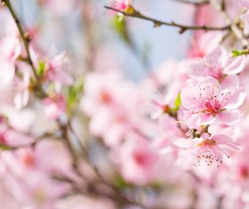 Beautiful spring flowers HD picture 11