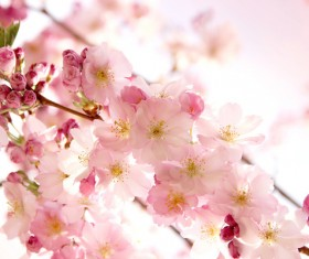 Beautiful spring flowers HD picture 14