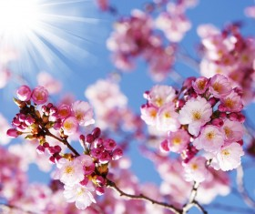 Beautiful spring flowers HD picture 15
