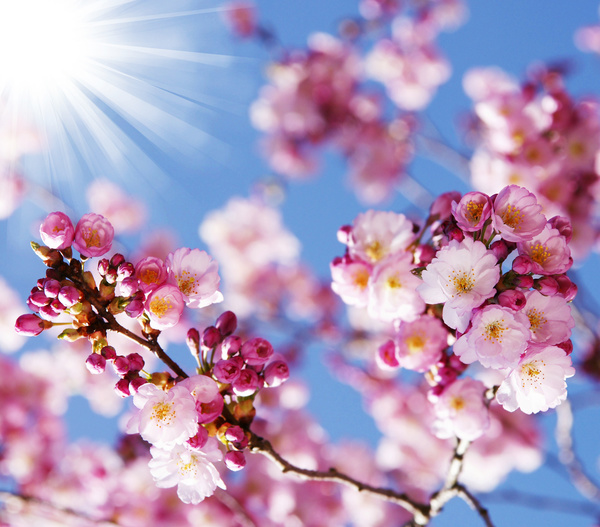Beautiful Spring Flowers Hd Picture 15 Free Download