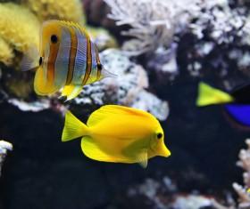 Beautiful watch tropical fish Stock Photo 05