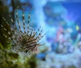 Beautiful watch tropical fish Stock Photo 06