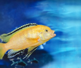 Beautiful watch tropical fish Stock Photo 07