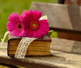 Bible and Gerbera Stock Photo