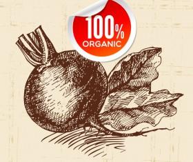 Big radish hand drawn sketch vector 02