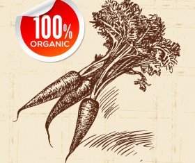 Carrot hand drawn sketch vector