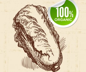 Chinese cabbage hand drawn sketch vector