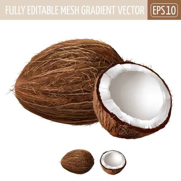 coconut realistic vectors vector food free download