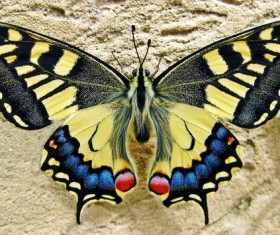 Color Swallowtail Butterfly Stock Photo