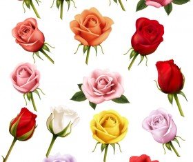 Colorful rose illustration vector material