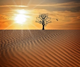 Desert of the evening HD picture