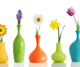 Different colors of flowers HD picture