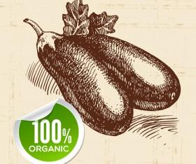 Eggplant hand drawn sketch vector