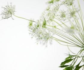 Elegant white flower background HD picture