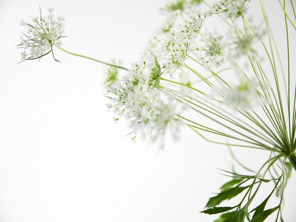 Elegant white flower background hd picture backgrounds stock photo elegant white flower background hd picture mightylinksfo Images