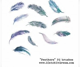 Feathers photoshop brushes set