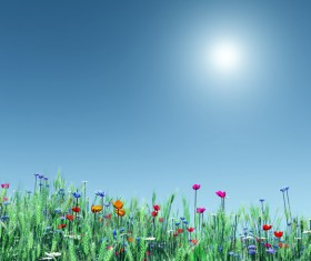 Flowers and landscape HD picture