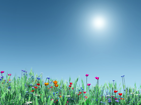Flowers And Landscape Hd Picture Free Download