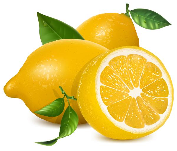 lemon vector free download - photo #3
