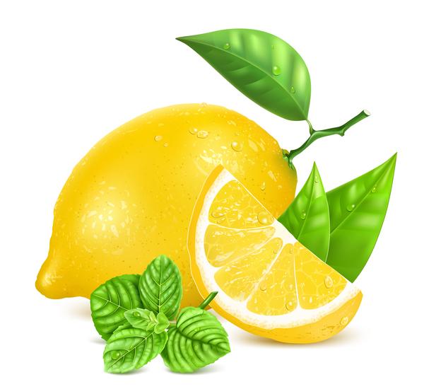 lemon vector free download - photo #10