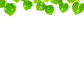 Green Leaves and blank background vector 03