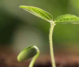 Green plants sprout Stock Photo