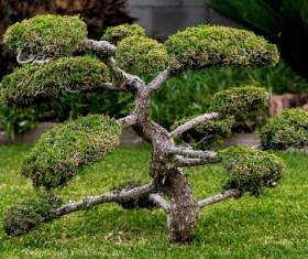 Landscape tree Stock Photo