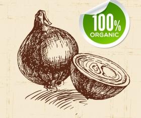 Onion hand drawn sketch vector