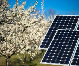 Orchard with solar panels Stock Photo