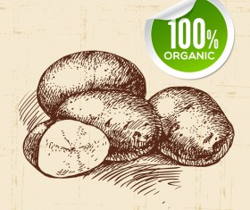 Potato hand drawn sketch vector