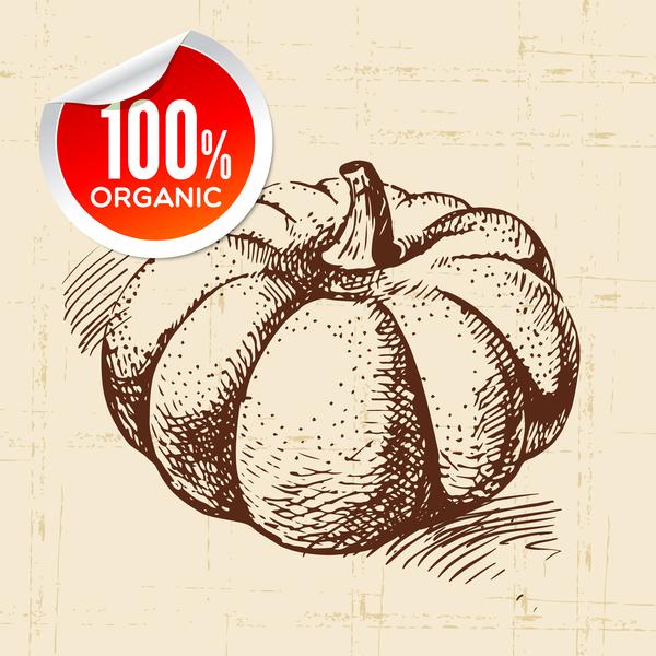 Pumpkin hand drawn sketch vector free download