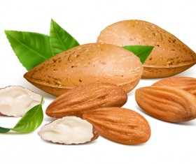Realistic almond with green leaves vector 01