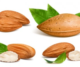 Realistic almond with green leaves vector 02