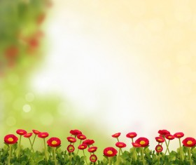 Red daisies HD picture