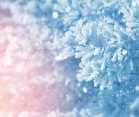 Snow and pine branches Stock Photo 02