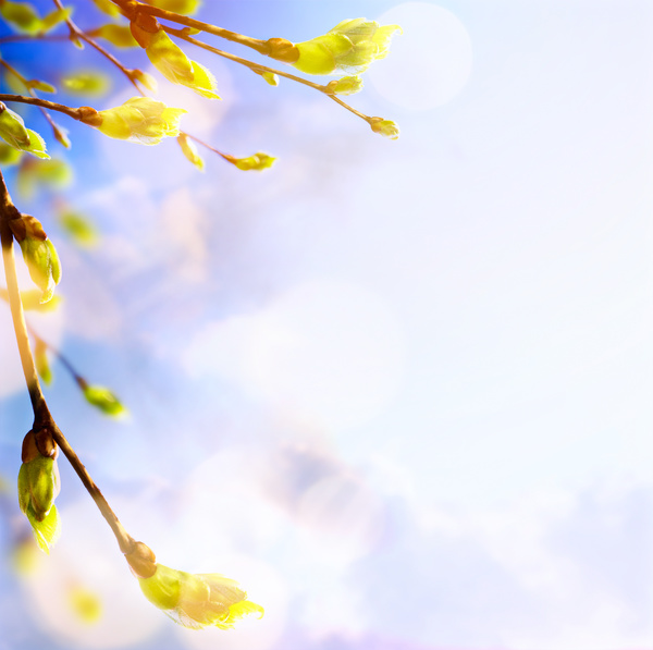 Spring 2017 Backgrounds HD picture 01 - Backgrounds stock photo free download