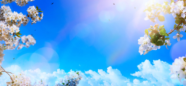 Spring 2017 Backgrounds HD picture 02 - Backgrounds stock photo free download