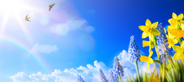 Spring 2017 Backgrounds HD picture 04 - Backgrounds stock photo free download