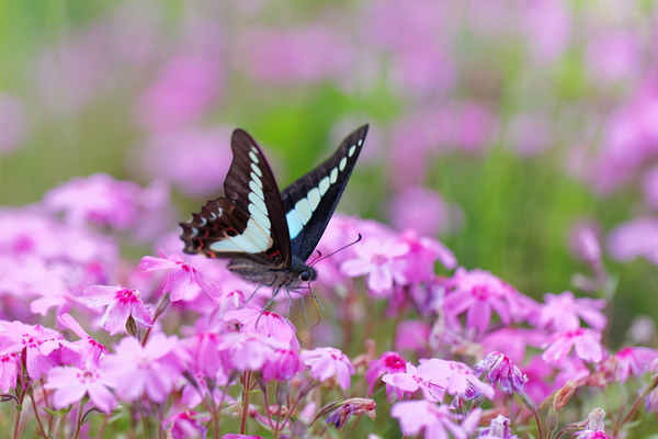Spring Flowers With Butterflies Hd Picture Free Download