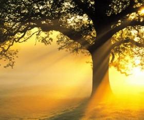Sunlight trees Stock Photo